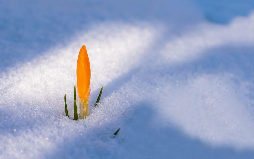 Late Season Snow Tactics