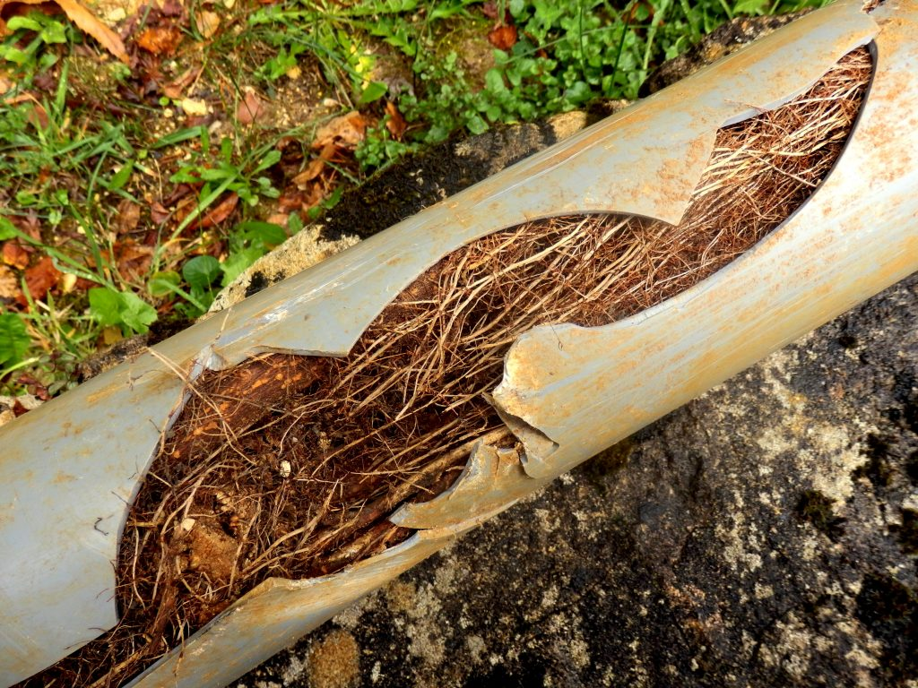 The Warning Signs Of A Main Sewer Line Blockage